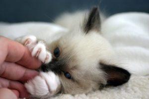 Manfaat Bermain dengan kucing